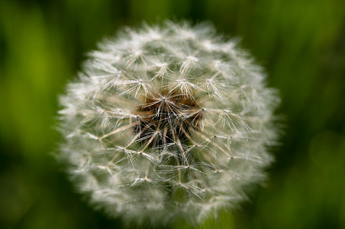 Healthy Living Tips: Five Ways for Boosting Your Health to Avoid Allergies